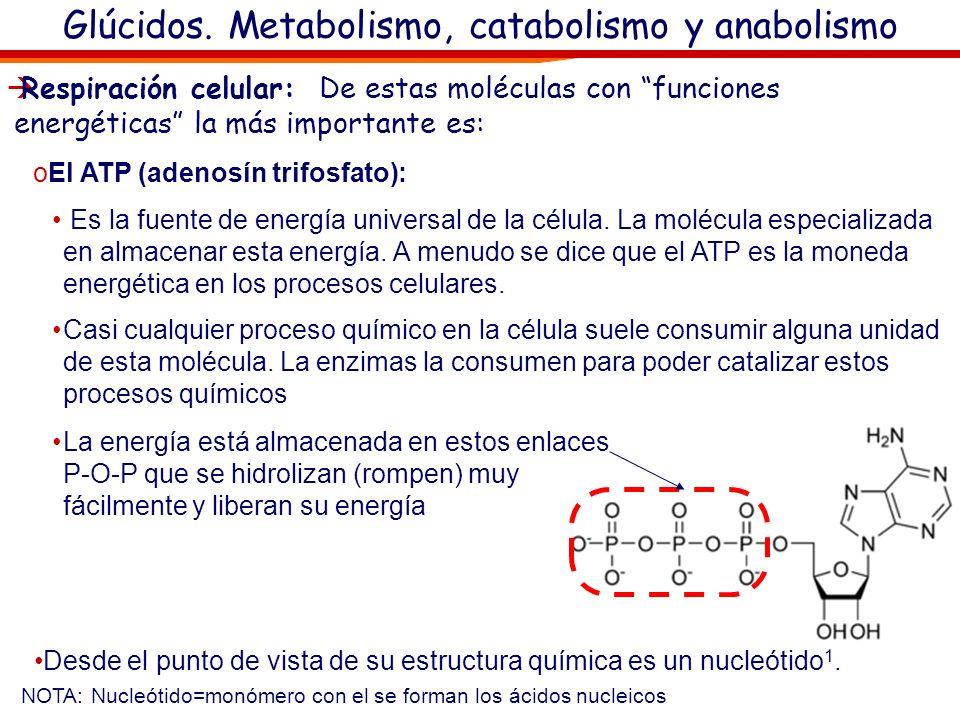 Glúcidos. Metabolismo, catabolismo y anabolismo Catabolismo (del griego catabolé, hacia abajo) es el conjunto de reacciones metabólicas que rompen los