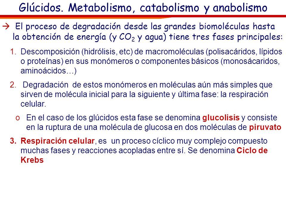 Glúcidos. Metabolismo, catabolismo y anabolismo Respiración celular: Existen otras moléculas con funciones energéticas : NAD, NADH y H+: oTienen propi