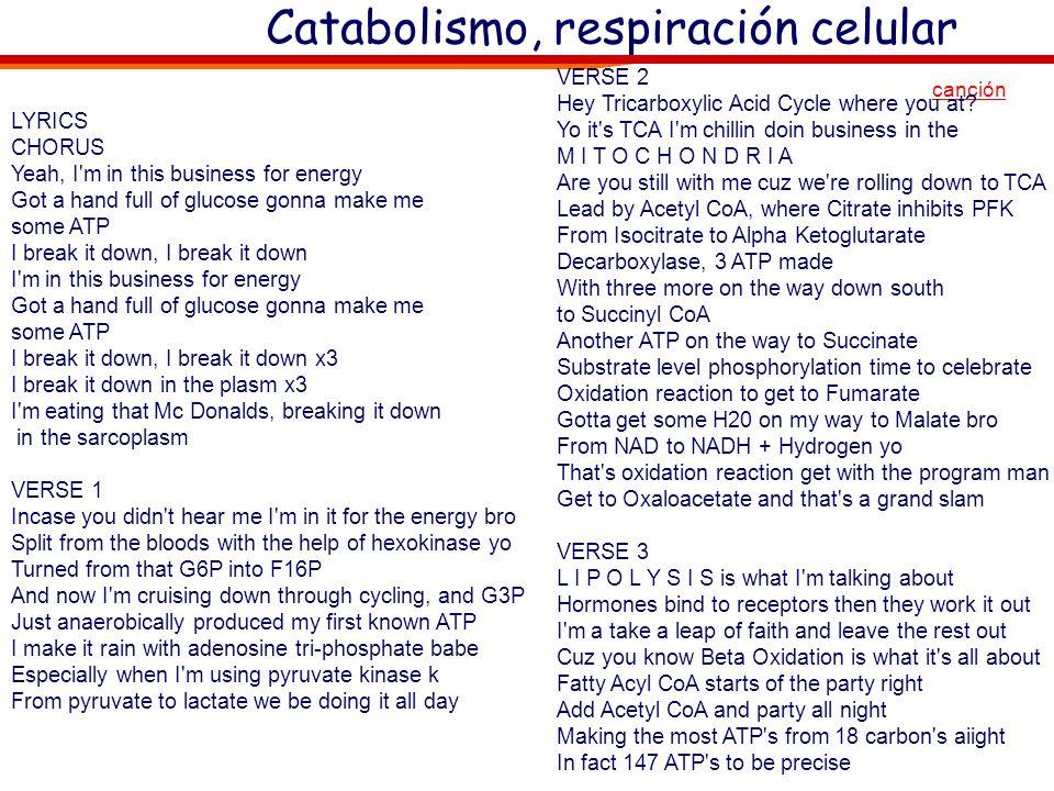 Catabolismo, respiración celular Sólo la idea (no hay que sabérselo) Sólo la idea (no hay que sabérselo) canción glucólisis