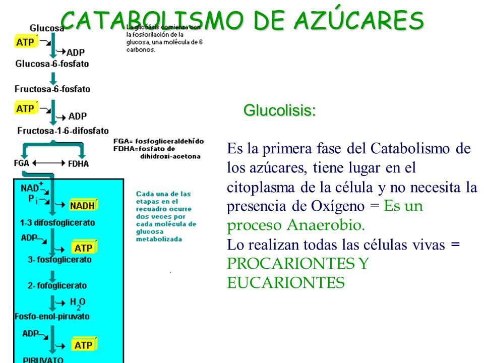 Catabolismo, respiración celular canción