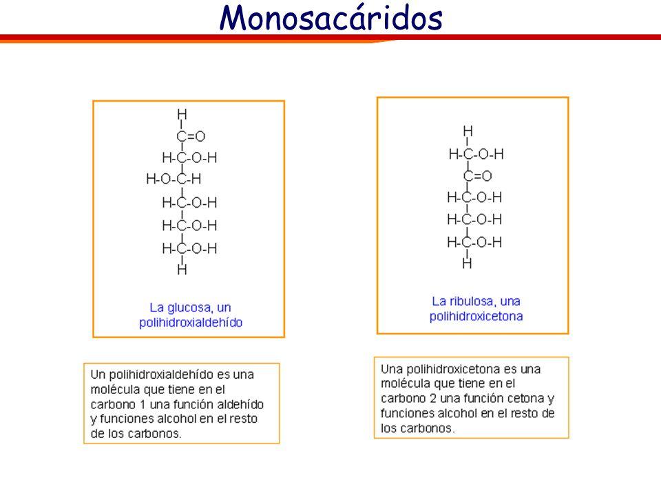 CATABOLISMO DE PROTEÍNAS No se utilizan normalmente como fuente de energía. 1.Hidrólisis de la proteína produciendo aminoácidos libres. 2.Desaminación