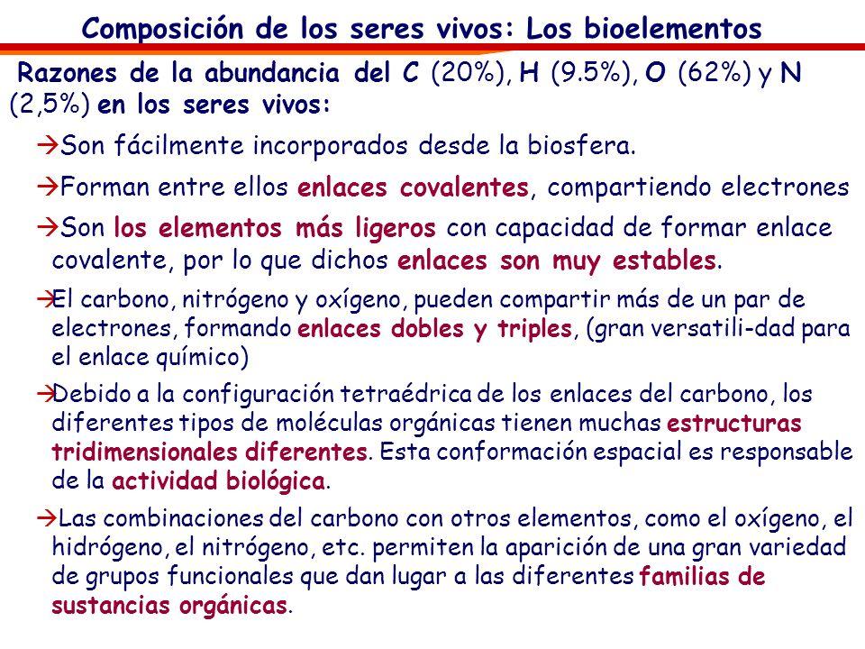 Composición de los seres vivos: Los bioelementos Clasificaremos los bioelementos en: Bioelementos primarios: O, C, H, N, P y S. Representan en su conj