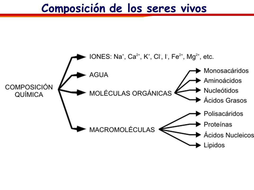 Composición de los seres vivos: Los bioelementos Razones de la abundancia del C (20%), H (9.5%), O (62%) y N (2,5%) en los seres vivos: Son fácilmente