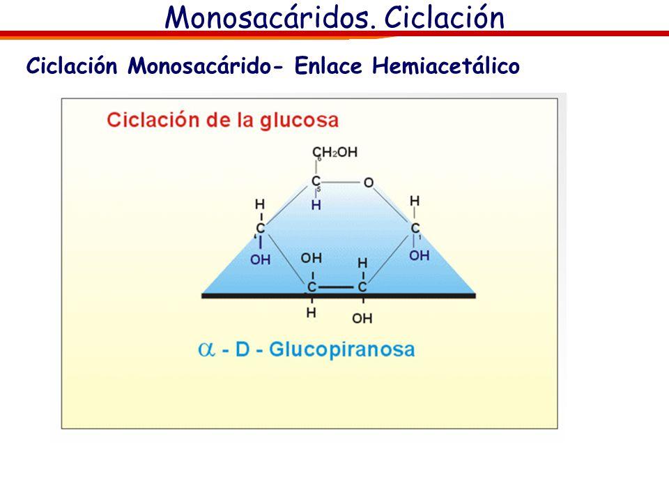 Monosacáridos. Ciclación Ciclación Glucosa, Proyecciones de Tollens y de Haworth OH Hemiacetálico Carbono anómerico 1 2 3 4 5 6 1 2 3 4 5 6