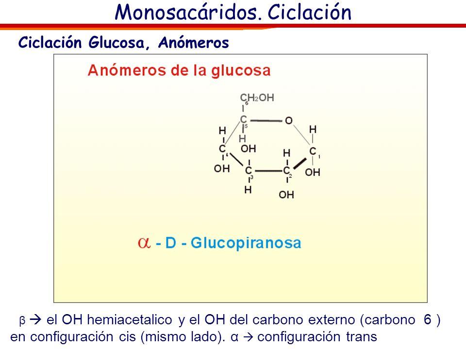 Monosacáridos. Ciclación Ciclación Monosacárido- Enlace Hemiacetálico