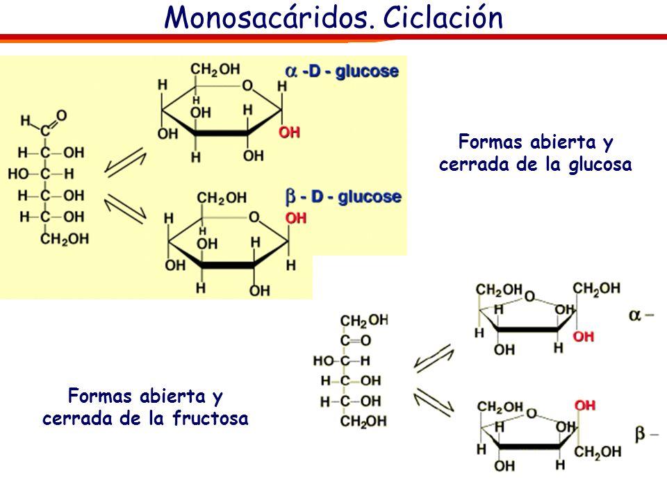 Monosacáridos. Ciclación Ciclación Glucosa, Anómeros