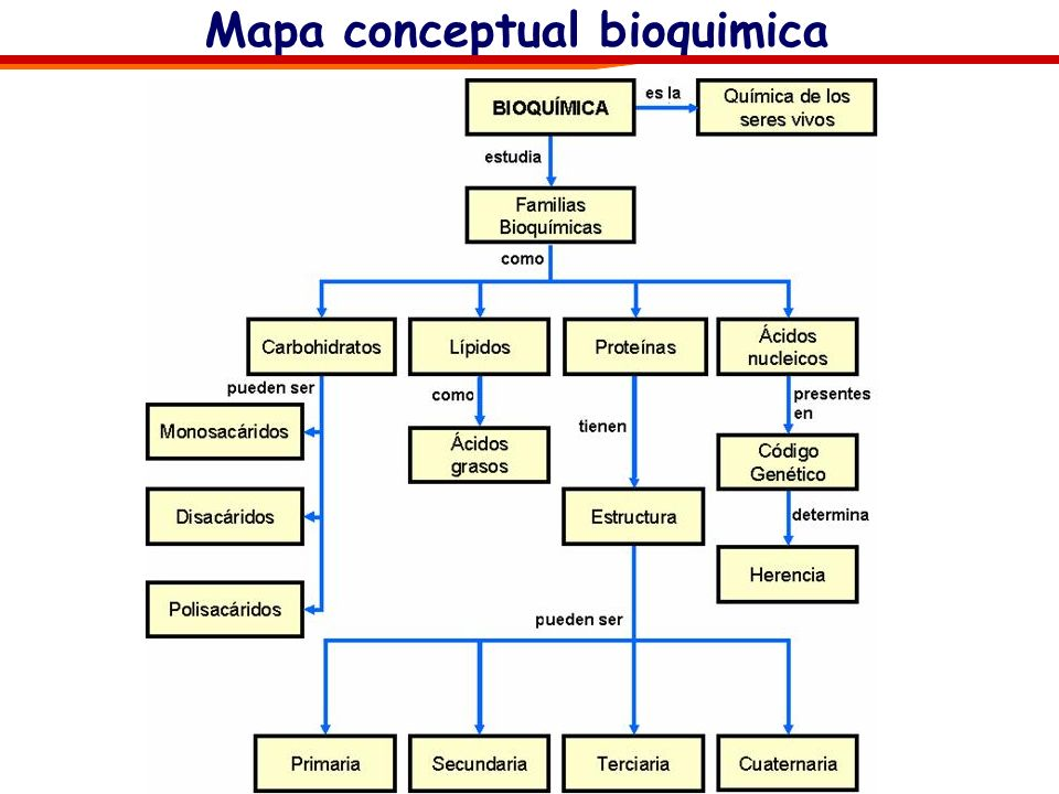 CompuestoPorcentaje de peso total Agua 70% Macromoléculas: Proteínas 15% Ácidos Nucleicos 7 % (1% ADN, 6%ARN) Polisacáridos 3% Lípidos 2% Moléculas or
