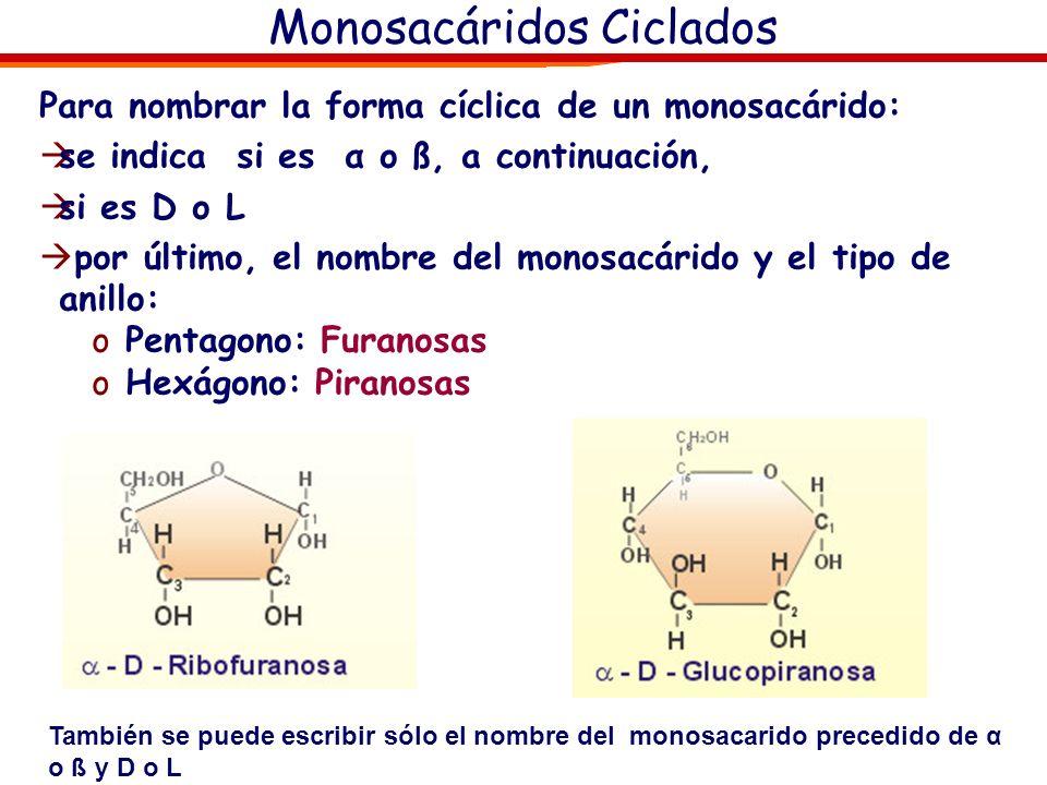 Monosacáridos. Ciclación Ciclación Fructosa OH Hemiacetálico Carbono anómerico 1 2 3 4 5 6 1 2 3 4 5 6