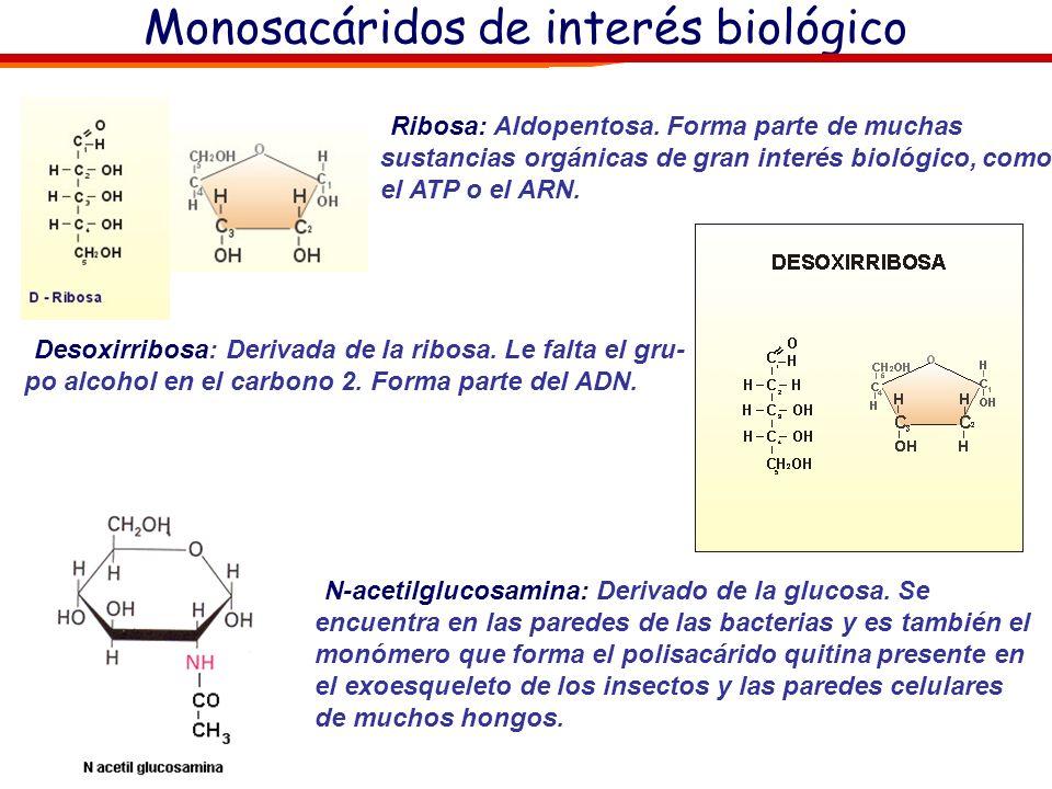 Monosacáridos de interés biológico: Glucosa: Sustancia muy difundida tanto entre los vegetales (uvas) como entre los animales. Forma parte de muchos d