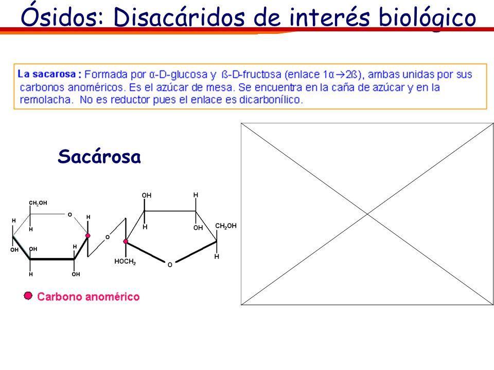 Ósidos: Oligosacáridos El -OH o los -OHs que intervienen en la unión pueden encontrarse bien en forma α o ß, lo que dará lugar a sustancias diferentes