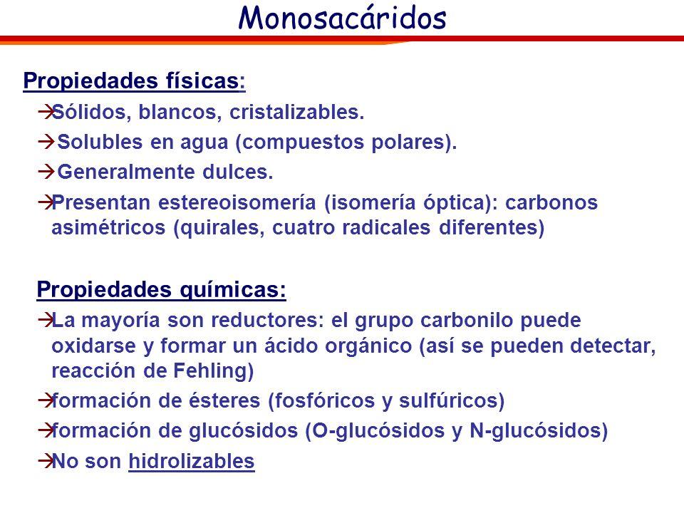Químicamente son polihidroxialdehídos o polihidroxicetonas Los monosacáridos se clasifican según su grupo funcional en Aldosas, que tienen función ald