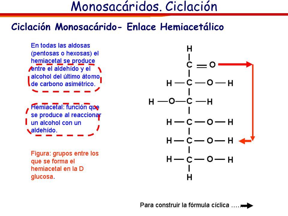 Monosacáridos. Ciclación Hemiacetales (grupo carbonilo+alcohol) AldehidoAlcoholHemiacetal + + CetonaAlcoholHemicetal + + Para saber más (sólo para cur