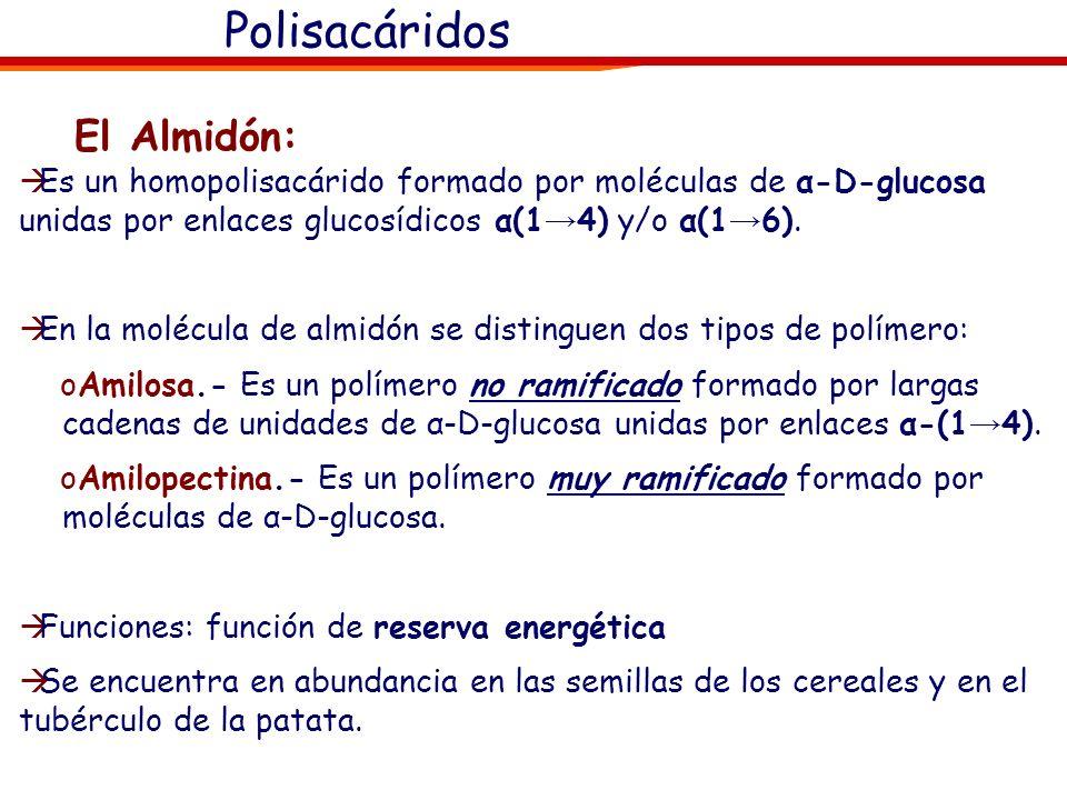 Polisacáridos Son los glúcidos más abundantes, Son el resultado de la unión de más de 10 unidades de azúcares sencillos (generalmente la glucosa) medi