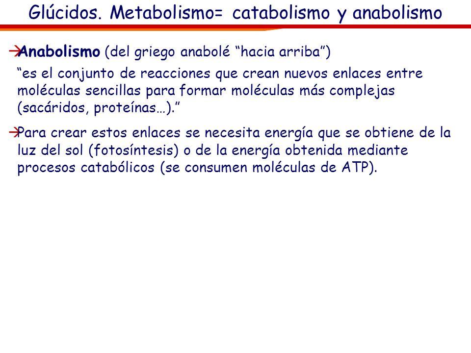 Glúcidos. Metabolismo = catabolismo y anabolismo El metabolismo celular es el conjunto de todas las reacciones químicas que mantienen la vida de la cé