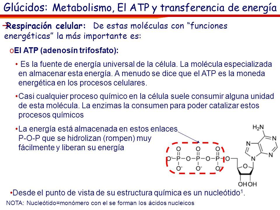 Glúcidos. Metabolismo: Catabolismo Catabolismo (del griego catabolé, hacia abajo) Es el conjunto de reacciones metabólicas que rompen los enlaces de m