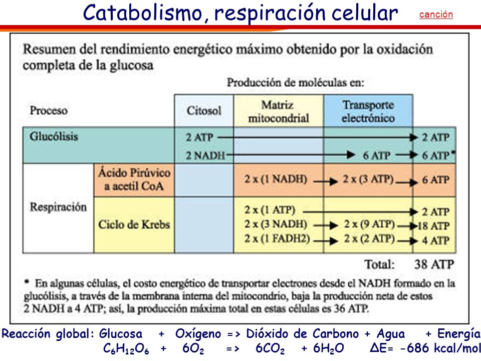 Catabolismo de monosacáridos: glucólisis+ respiración Reacción global: Glucosa + Oxígeno => Dióxido de Carbono + Agua + Energía C 6 H 12 O 6 + 6O 2 =>