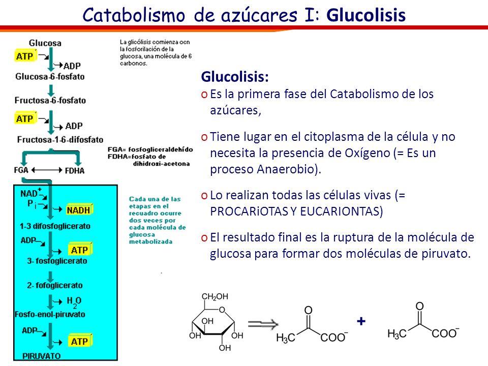 Catabolismo, respiración celular canción Reacción global: Glucosa + Oxígeno => Dióxido de Carbono + Agua + Energía C 6 H 12 O 6 + 6O 2 => 6CO 2 + 6H 2