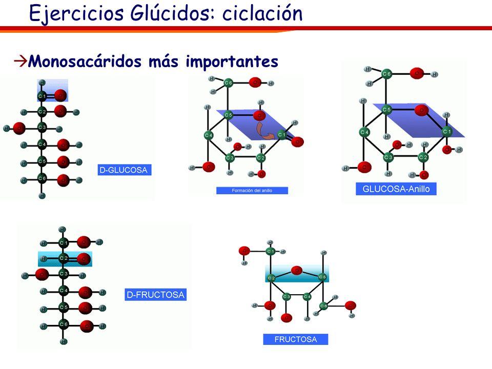 Glucosa Ciclada (isómeros, anómeros): β-D- Glucosa β-L- Glucosa D- Glucosa (lineal) α-D-Glucosa L- Glucosa (lineal) Los anómeros son enantiómeros que