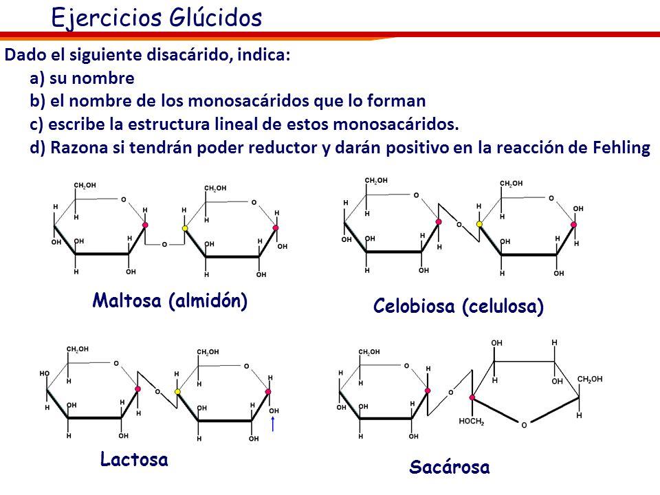 Monosacáridos más importantes 1 23 4 D-Ribosa D-galactosa Β-D-galactosa