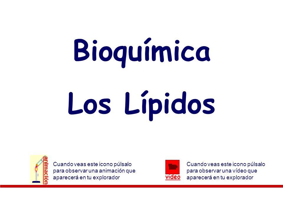 Lípidos: Ácidos grasos insaturados Hidrogenación (endurecimiento aceites): Cuanto mayor cantidad de ácidos grasos insaturados tenga, menor es el punto de fusión.