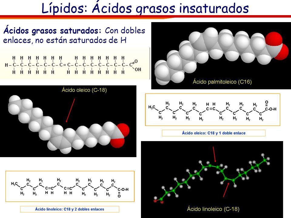 Lípidos: Ácidos grasos insaturados Ácidos grasos saturados: Con dobles enlaces, no están saturados de H