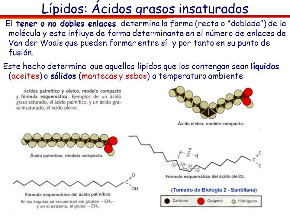 Lípidos: Ácidos grasos insaturados El tener o no dobles enlaces determina la forma (recta o doblada) de la molécula y esta influye de forma determinan