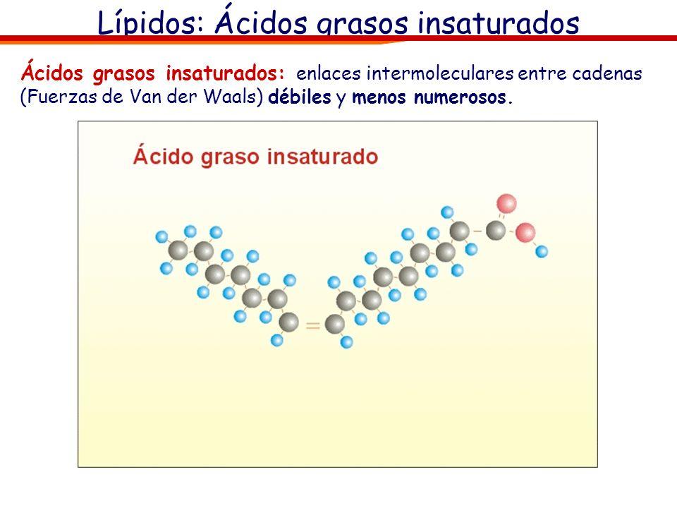 Lípidos: Ácidos grasos insaturados Ácidos grasos insaturados: enlaces intermoleculares entre cadenas (Fuerzas de Van der Waals) débiles y menos numero