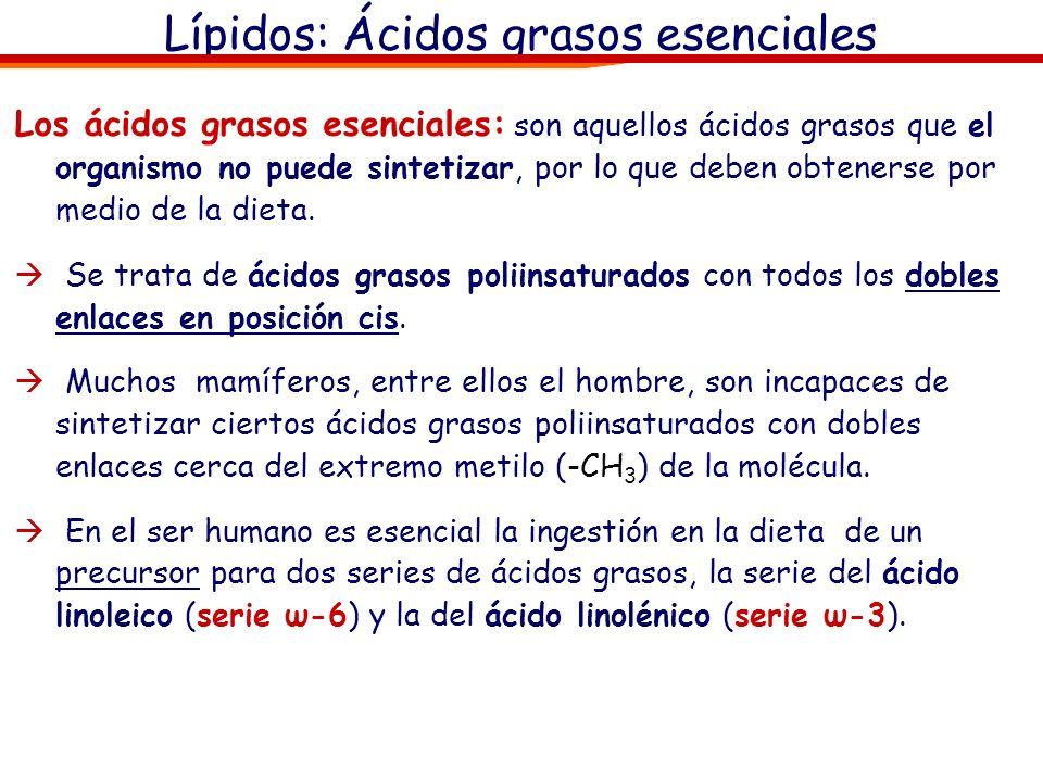 Lípidos: Ácidos grasos esenciales Los ácidos grasos esenciales: son aquellos ácidos grasos que el organismo no puede sintetizar, por lo que deben obte