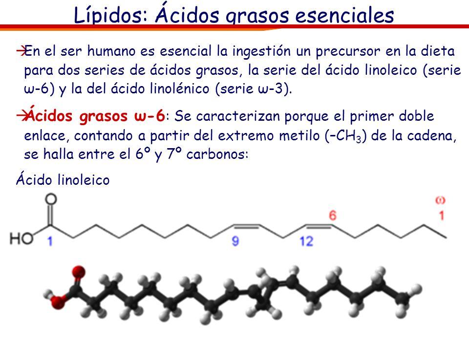 Lípidos: Ácidos grasos esenciales En el ser humano es esencial la ingestión un precursor en la dieta para dos series de ácidos grasos, la serie del ác