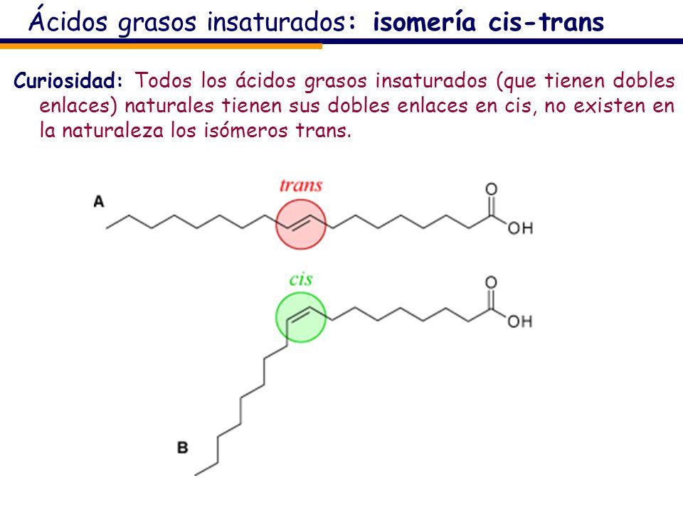Ácidos grasos insaturados: isomería cis-trans Curiosidad: Todos los ácidos grasos insaturados (que tienen dobles enlaces) naturales tienen sus dobles
