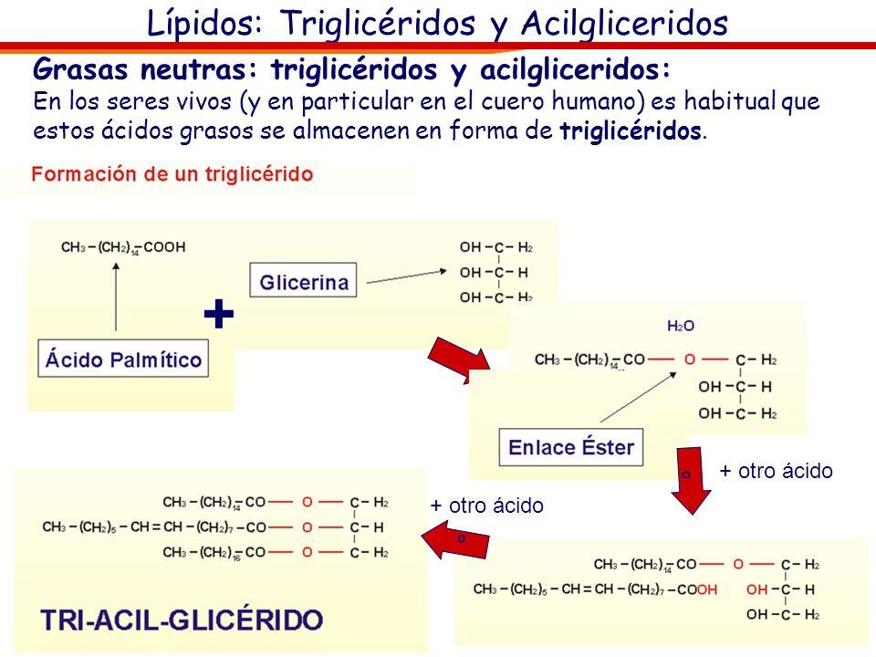 Lípidos: Triglicéridos y Acilgliceridos + º º + otro ácido Grasas neutras: triglicéridos y acilgliceridos: En los seres vivos (y en particular en el c
