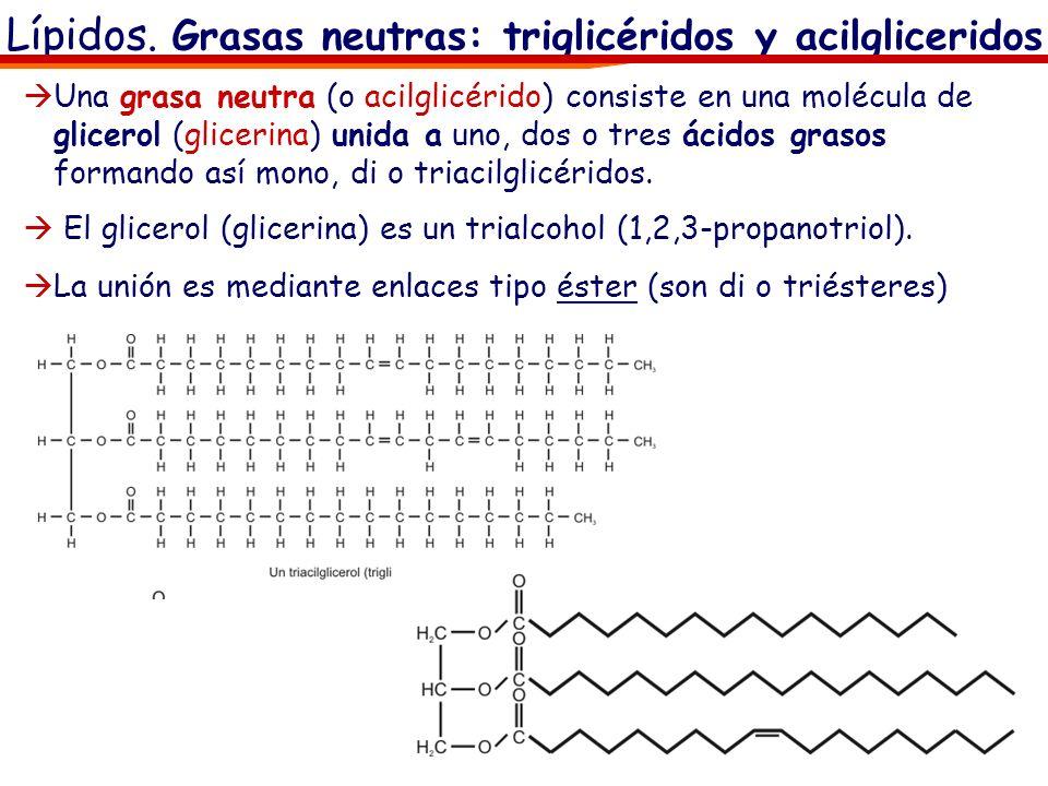 Lípidos. Grasas neutras: triglicéridos y acilgliceridos Una grasa neutra (o acilglicérido) consiste en una molécula de glicerol (glicerina) unida a un