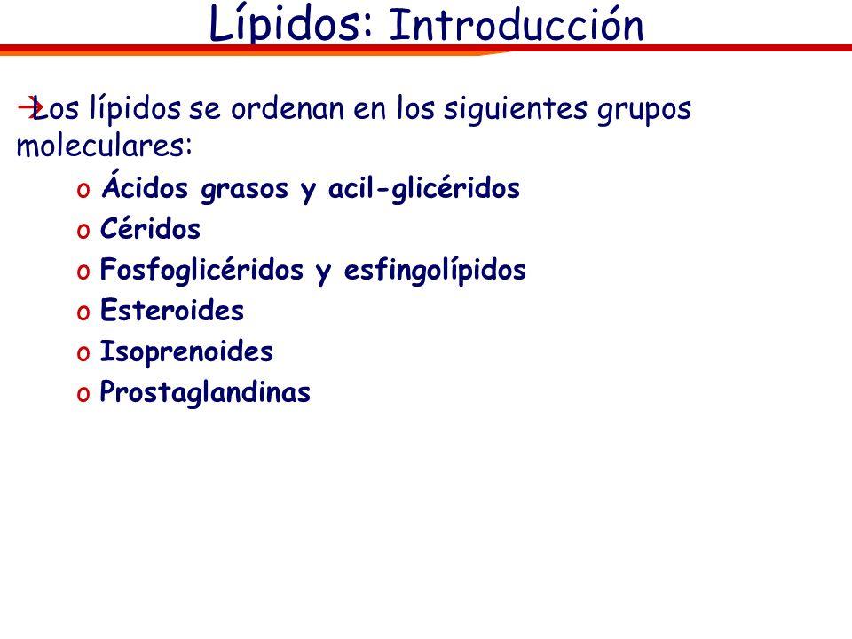 Los lípidos se ordenan en los siguientes grupos moleculares: oÁcidos grasos oAcil-glicéridos oCéridos oFosfoglicéridos y esfingolípidos oEsteroides oIsoprenoides oProstaglandinas Lípidos: Introducción