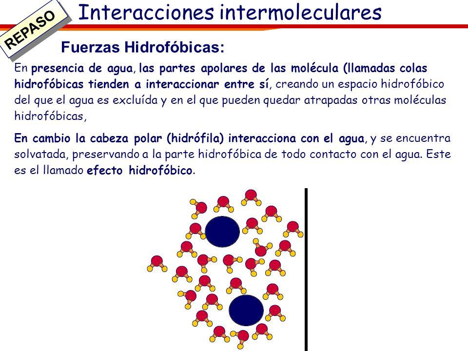 Interacciones intermoleculares Fuerzas Hidrofóbicas: En presencia de agua, las partes apolares de las molécula (llamadas colas hidrofóbicas tienden a
