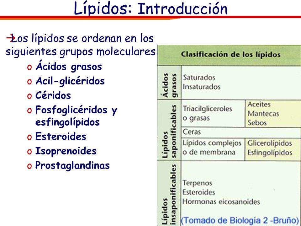 Los lípidos se ordenan en los siguientes grupos moleculares: oÁcidos grasos oAcil-glicéridos oCéridos oFosfoglicéridos y esfingolípidos oEsteroides oI