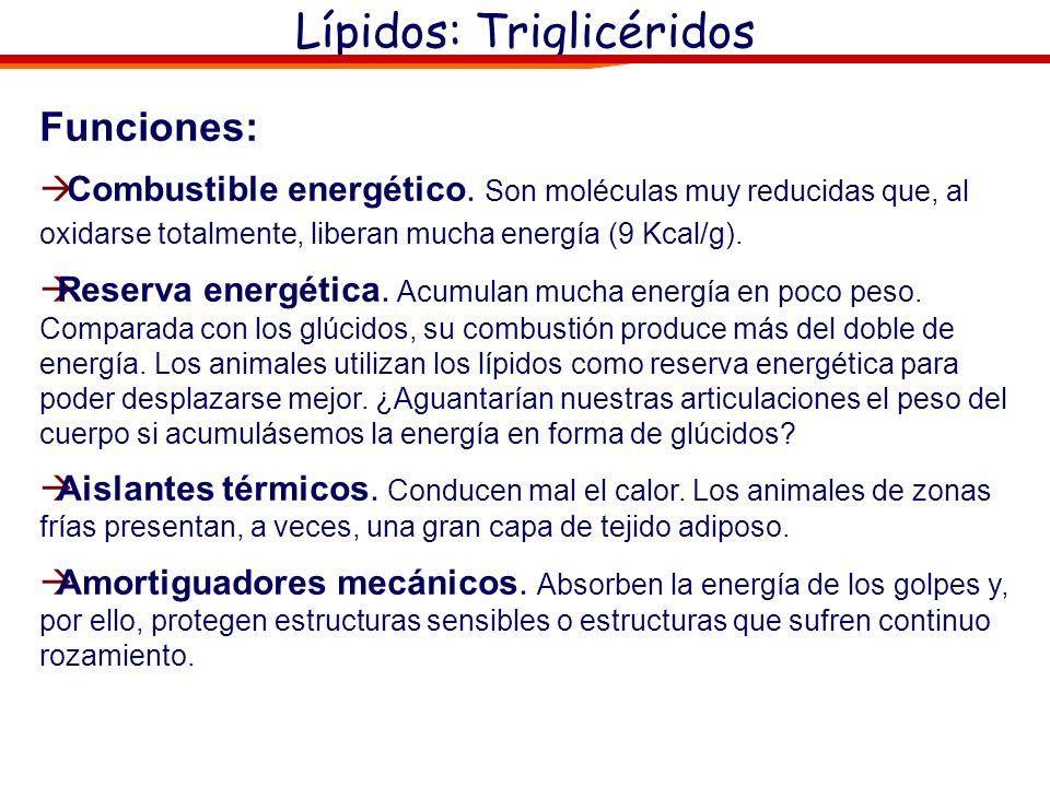 Lípidos: Triglicéridos Funciones: Combustible energético. Son moléculas muy reducidas que, al oxidarse totalmente, liberan mucha energía (9 Kcal/g). R
