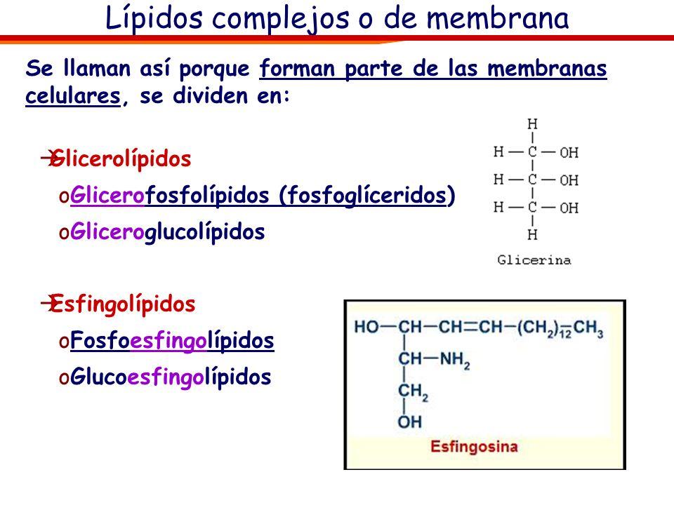Lípidos complejos o de membrana Se llaman así porque forman parte de las membranas celulares, se dividen en: Glicerolípidos oGlicerofosfolípidos (fosf