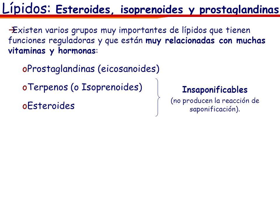 Lípidos: Esteroides, isoprenoides y prostaglandinas Existen varios grupos muy importantes de lípidos que tienen funciones reguladoras y que están muy