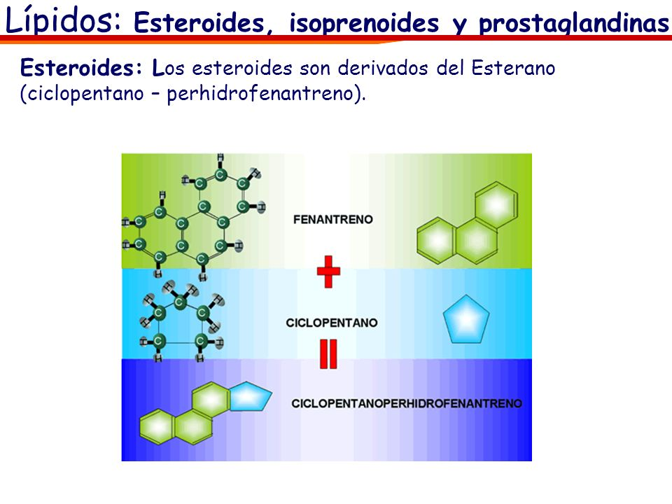 Lípidos: Esteroides, isoprenoides y prostaglandinas Esteroides: L os esteroides son derivados del Esterano (ciclopentano – perhidrofenantreno).