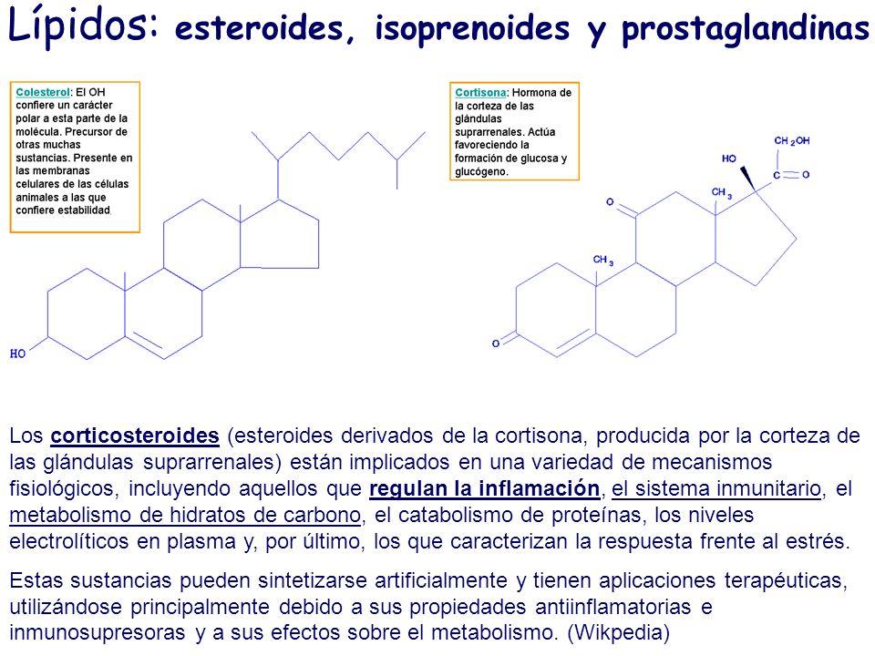 Lípidos: esteroides, isoprenoides y prostaglandinas Los corticosteroides (esteroides derivados de la cortisona, producida por la corteza de las glándu
