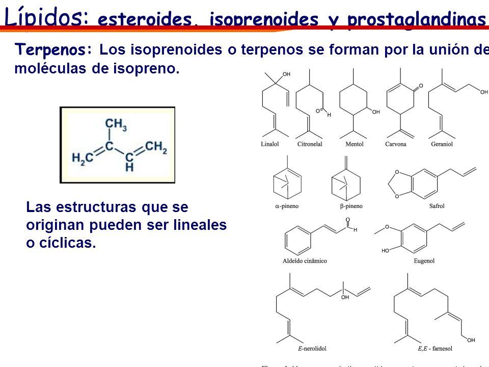 Terpenos: Los isoprenoides o terpenos se forman por la unión de moléculas de isopreno. Las estructuras que se originan pueden ser lineales o cíclicas.