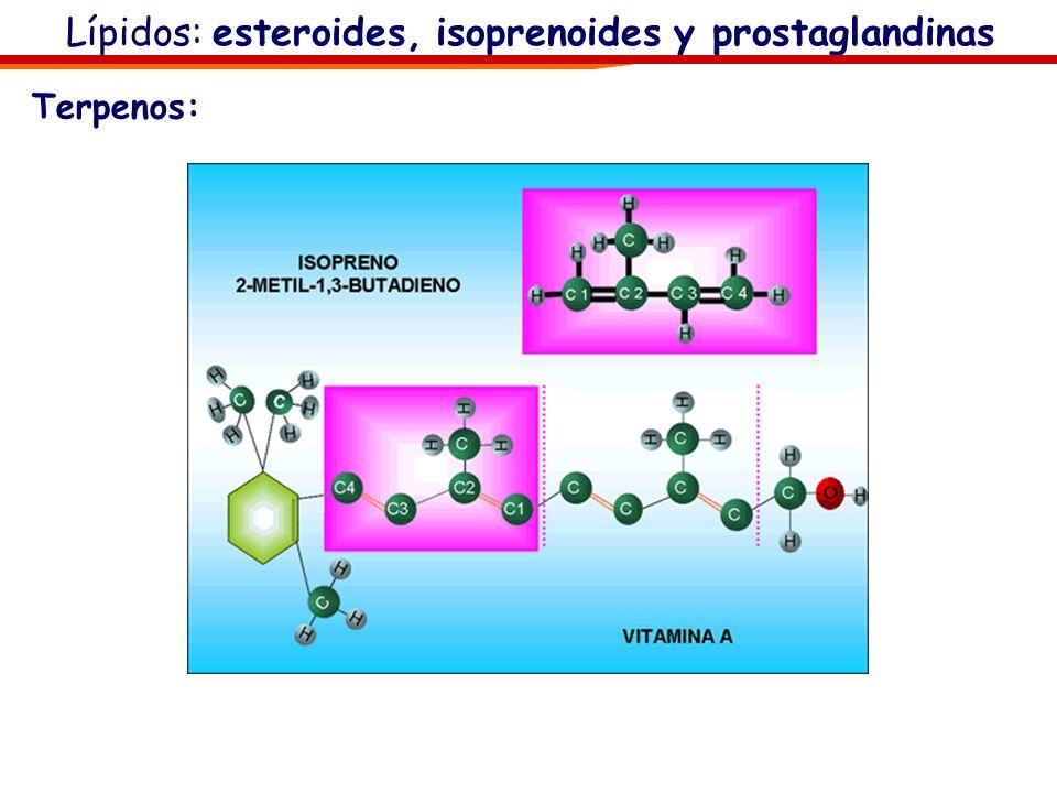 Lípidos: esteroides, isoprenoides y prostaglandinas Terpenos: