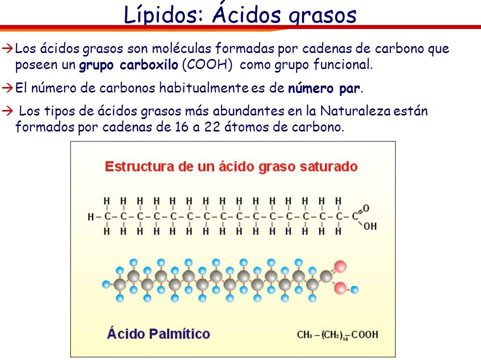 Lípidos: Ácidos grasos Los ácidos grasos son moléculas formadas por cadenas de carbono que poseen un grupo carboxilo (COOH) como grupo funcional. El n