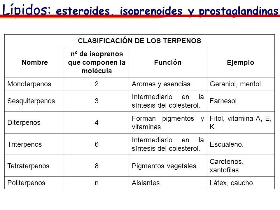 Lípidos: esteroides, isoprenoides y prostaglandinas CLASIFICACIÓN DE LOS TERPENOS Nombre nº de isoprenos que componen la molécula FunciónEjemplo Monot