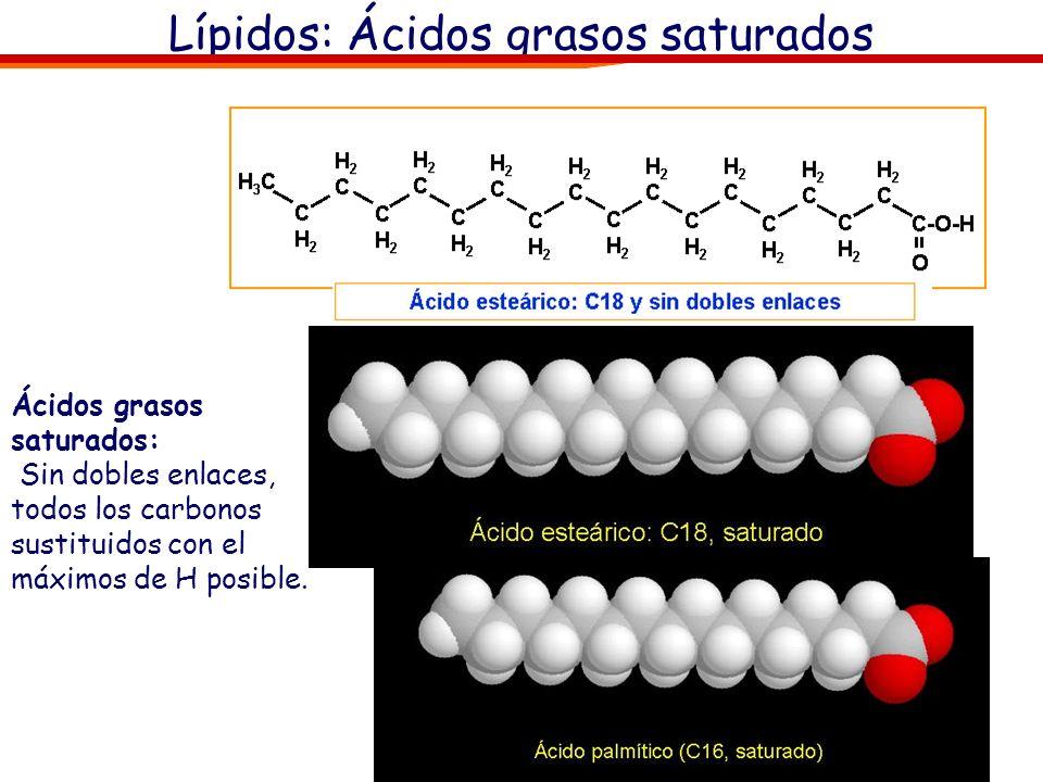 Lípidos: Ácidos grasos saturados Ácidos grasos saturados: Sin dobles enlaces, todos los carbonos sustituidos con el máximos de H posible.