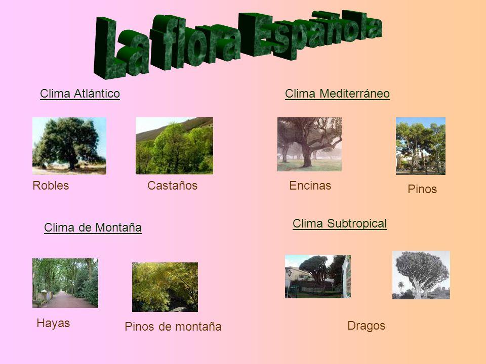 Clima Atlántico RoblesCastaños Clima Mediterráneo Encinas Pinos Dragos Clima de Montaña Clima Subtropical Hayas Pinos de montaña