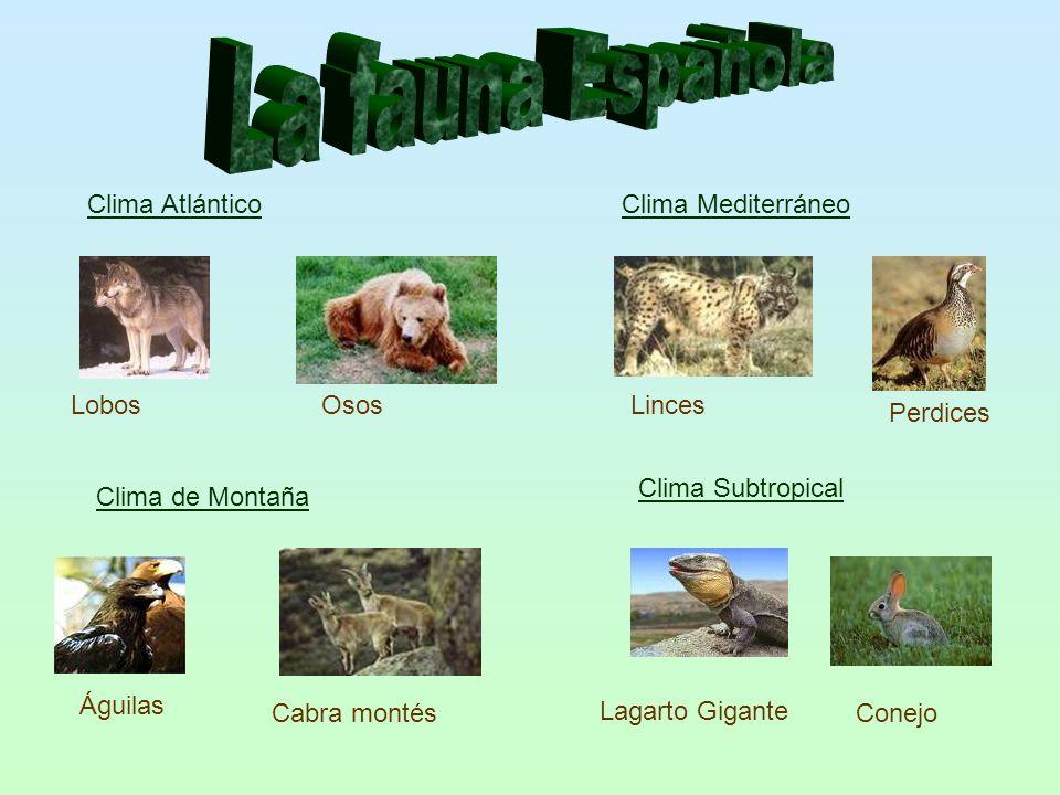 Clima Atlántico LobosOsos Clima Mediterráneo Linces Perdices Lagarto Gigante Clima de Montaña Clima Subtropical Águilas Cabra montésConejo