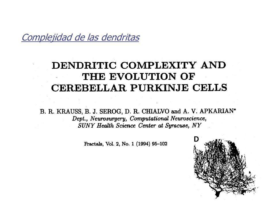 Complejidad de las dendritas