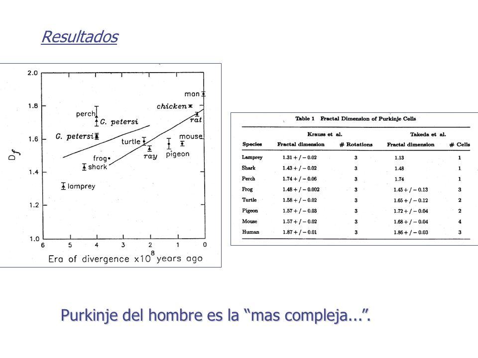 Resultados Purkinje del hombre es la mas compleja....