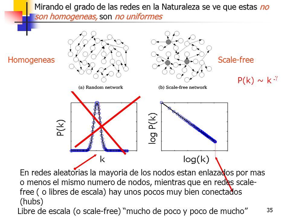35 Scale-freeHomogeneas P(k) ~ k - Mirando el grado de las redes en la Naturaleza se ve que estas no son homogeneas, son no uniformes En redes aleator